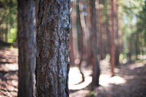 Nahaufnahmebaum im Wald foto