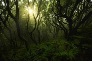 verzauberter grüner Wald foto