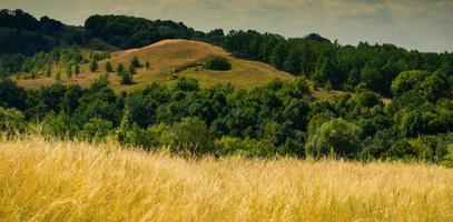 Steppe und Wald