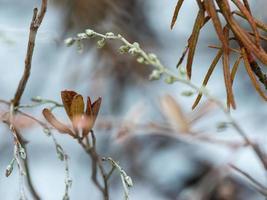 feuchte Pflanzenzweige im Winterwald