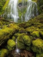 Proxy fällt in Oregon Regenwald. foto