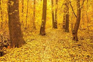 bunte Herbstbäume im Wald foto
