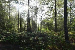 Wanderweg im tropischen Wald von Thailand foto