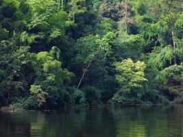 grüner Baum in Wald und Fluss foto