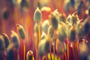 Weinlesefoto des blühenden Waldmoos foto