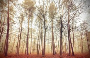 Retro gefiltertes Bild eines nebligen Waldes.