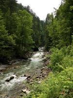 schnell fließender Fluss fließt durch den Wald foto