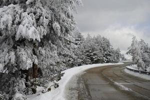 schneebedeckter Wald foto
