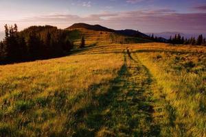 Kiefernwald foto