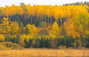 schöne Landschaft des herbstlichen Waldes nahe See