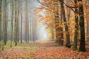 Fußweg im Herbstwald