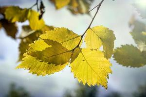 Blätter im Herbstwald bei sonnigem Wetter