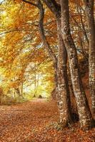 Bäume im Wald im Herbst