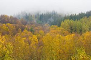 bunter Wald im Herbst foto