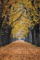 Herbst Waldweg / Gasse mit Jogger