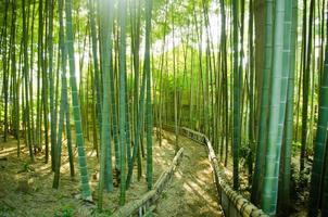 Bambus Wald Weg