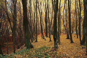 Herbstwald bedeckt gefallene gelbe Blätter