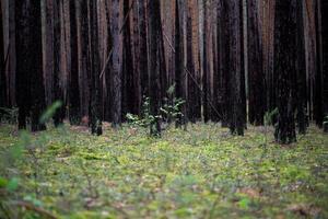 die Bäume im Wald