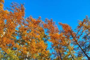 Der Herbst verlässt die Lärchenwälder in Kamikochi foto
