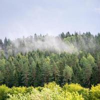 nebliger Wald nach dem Regen im Sommer foto