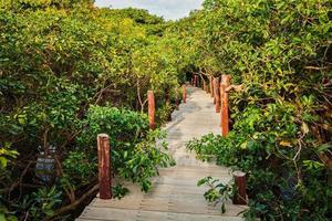 Holzbrücke im überfluteten Regenwalddschungel