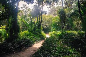 schöner Garten foto