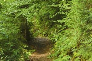 der Weg in einem Wald foto