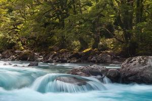 Waldfluss in Neuseeland foto