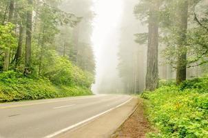 Straße durch einen nebligen Wald foto