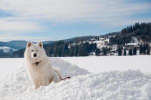 in der Nähe eines Wintersees in den Alpen