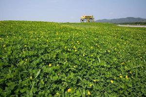 Wagen voller Kürbisse auf dem Bauernhof foto