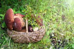 weiße Pilze im Korb im Wald