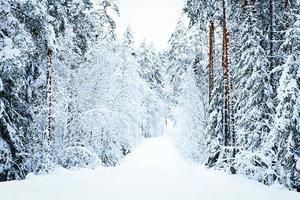 russische Winterwaldstraße im Schnee