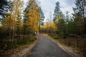 Gehweg im Park foto
