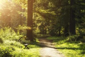 Wunderschöner Sonnenschein bricht durch Bäume im Waldwald foto