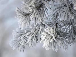 gefrorener Zweig foto