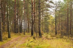 Herbstlandschaft mit gelben Bäumen und rotem Laub
