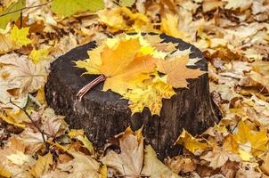 Hintergrund des bunten Herbstlaubs auf Waldboden foto