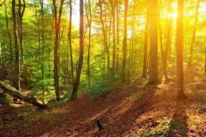 Sommerwald in einem Strahl der Morgensonne foto