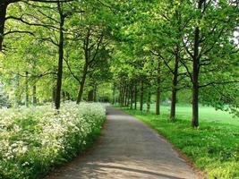 Fußgängerweg im Wald im Sommer foto