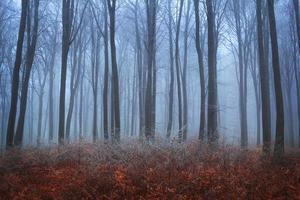 blauer Nebel im Spätherbst im Wald