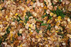 gefallene Blätter Hintergrund foto