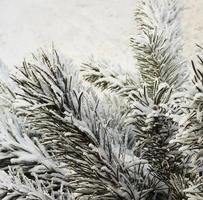 Schnee Weihnachtsbaum Zweige, im Freien foto