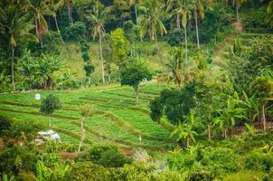 Reisterrasse auf der Insel Lombok, Indonesien foto