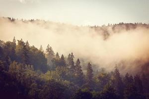 grauer Nebel unter einem Wald foto