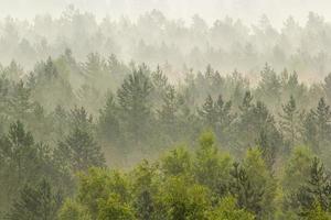Nebel über dem Wald foto