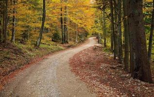 Straße im bunten Wald foto