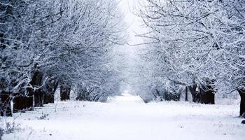 Straße durch gefrorenen Wald mit Schnee foto