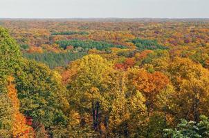 Herbstpanorama in einem Wald im Mittleren Westen foto