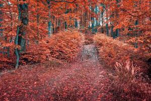 bunter Herbstmorgen im dunklen Bergwald.